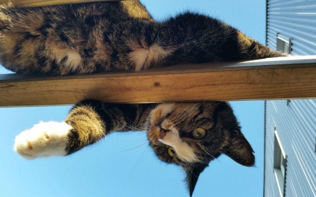 Zoekt u een leuke kat?