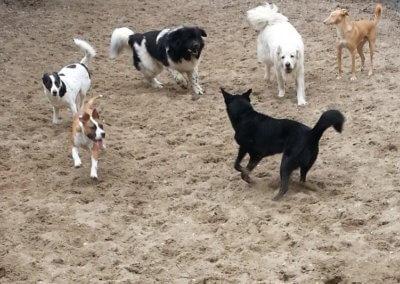 Honden-zandbak
