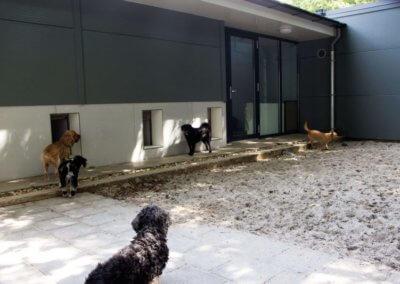 honden-speelweide-800x533
