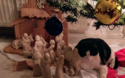KerstKoos